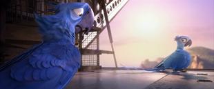Rio (movie) wallpaper - Blu and Jewel on air plane