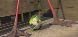 Scaredy bird