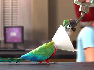 Mainpage-Navmap-Thumb-Crimson-bellied-Parakeet-(movie)