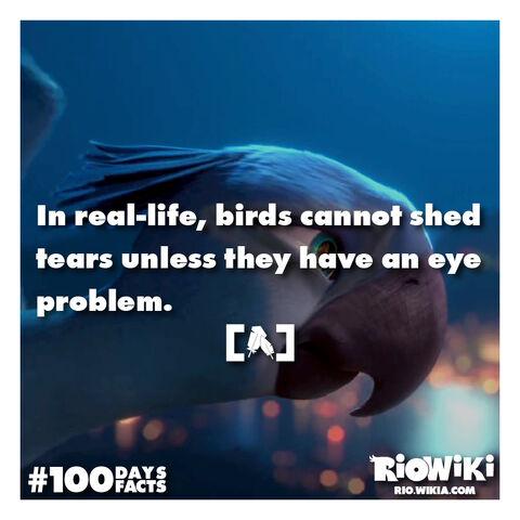 File:Rio-Wiki-100Days100Facts-091.jpg