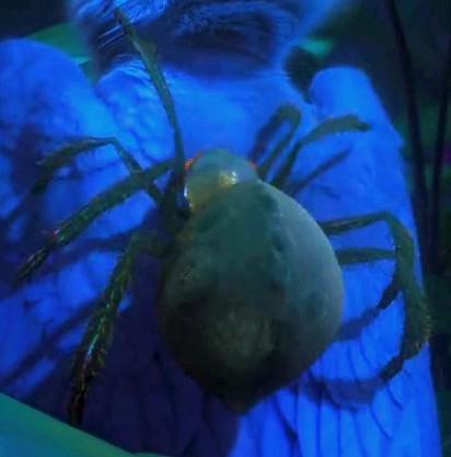 Plik:Spidereee.jpg