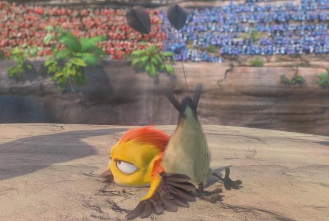 File:Coin toss bird infobox.png