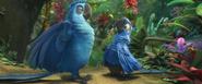 Eduardo and Blu