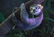 The female sloth 2
