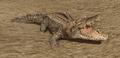 R2 Cr Alligator.png