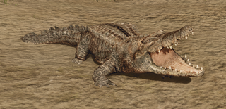 R2 Cr Alligator