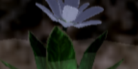 Papu Flower