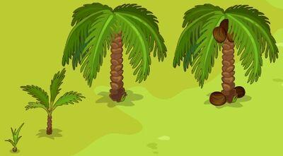 Coconut-Growth