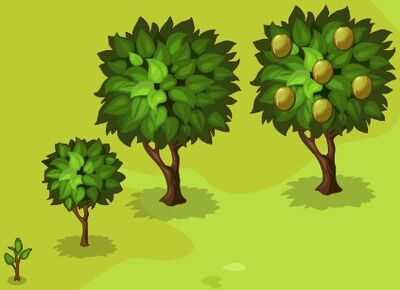 Kiwi-Growth