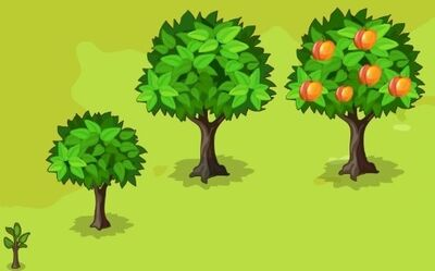 Peach-Growth