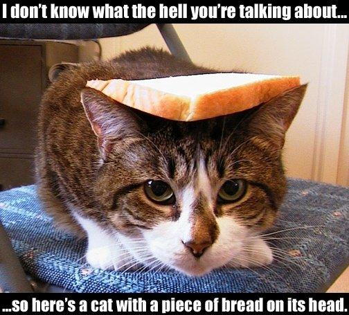 File:Breadcat.jpg