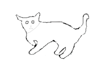 Male Shot-hair cat