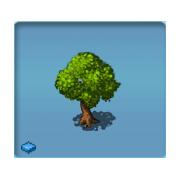 Luxury Oak