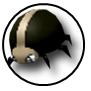 Rank c 03 ladybird