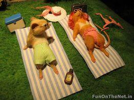 Mouse-diorama-sunbath