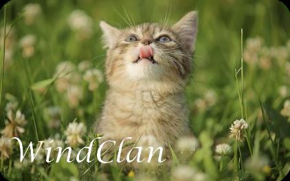 WindClan Banner