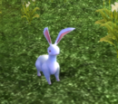 White Cave Rabbit