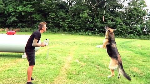 BAD IDEA... DOG vs MEAT DRONE!!