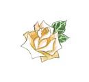 File:Roses4.jpg