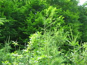 Pădure1.jpg