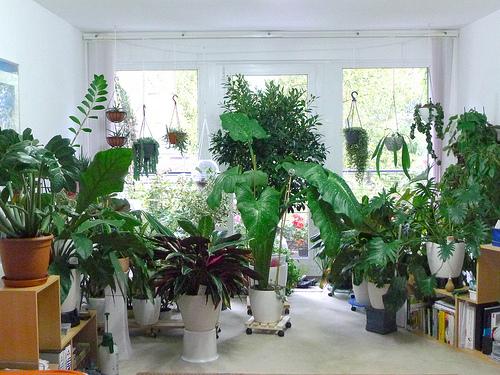 File:House plants.jpg