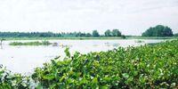Dreglar Marsh