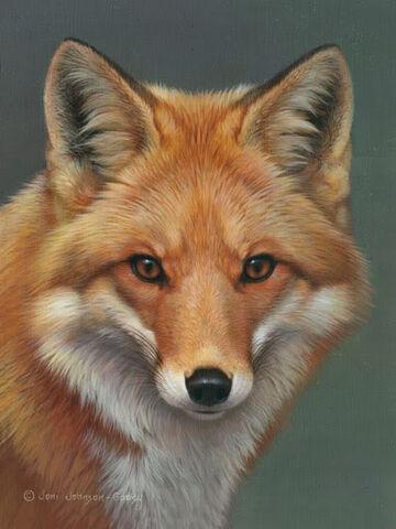 File:Red-fox.jpg