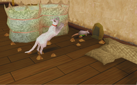 Pox hunting rats