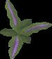 Clean wormwood leaf detail