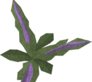 Clean wormwood leaf