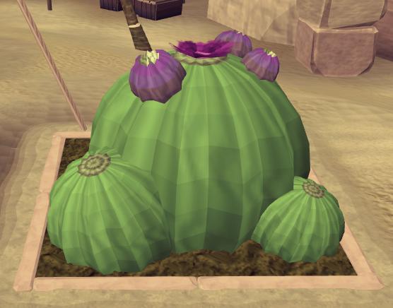 File:Potato cactus8.png