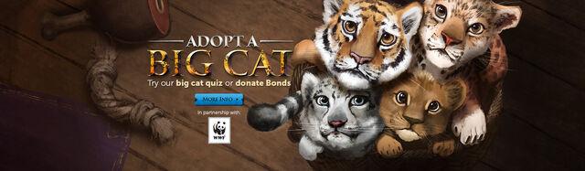 File:Big Cats head banner.jpg
