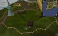 Scan clue Fremennik Isles Neitiznot inside yak pen.png