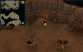 Scan clue Fremennik Slayer Dungeon north side of cockatrice chamber.png