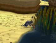 Releasing platypus
