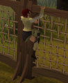 Gnome agility6.png