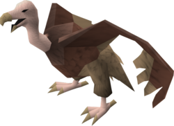 Vulture (brown) pet