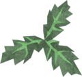 Clean aloe detail.png