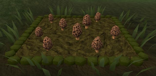 File:Morchella mushroom3.png