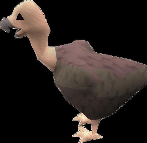 File:Vulture chick (grey ruff) pet.png