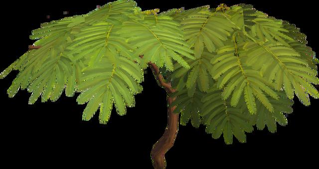 File:Acadia tree.png