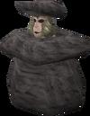 Rock (monkey)