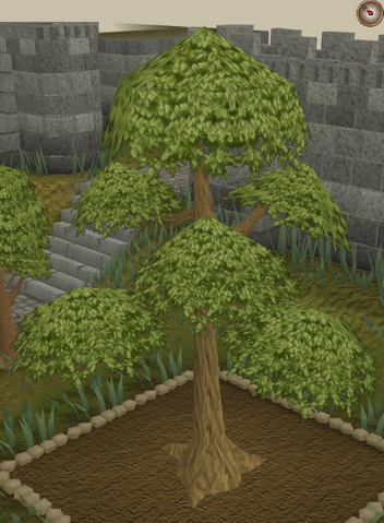 File:Yew9.png