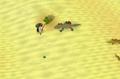 Desert lizard safespot.png