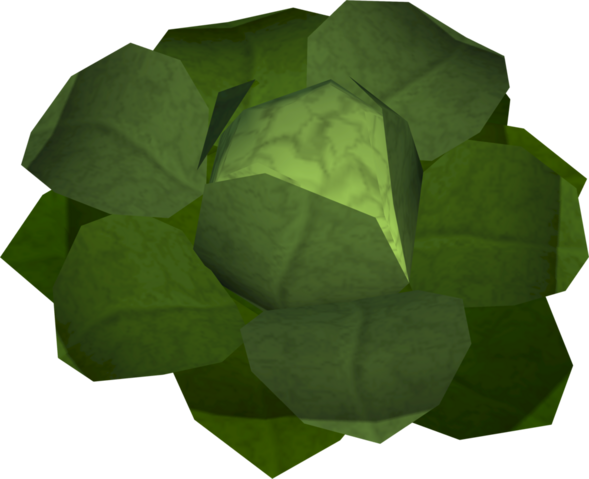 File:Cabbage (New Varrock) detail.png