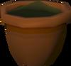 Elder seedling (w) detail