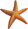 Throwing starfish token detail