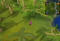 Compass clue Karamja south-west of log crossing Agility shortcut.png