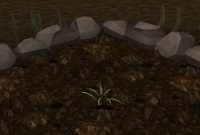 File:Pineapple plant 1.png