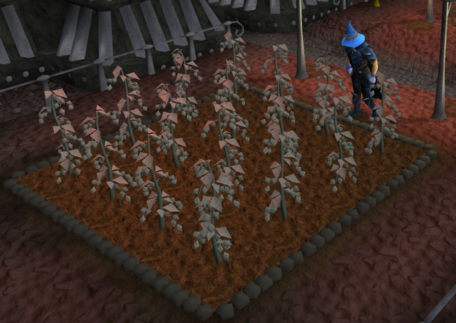 File:Kelda hops grown.png